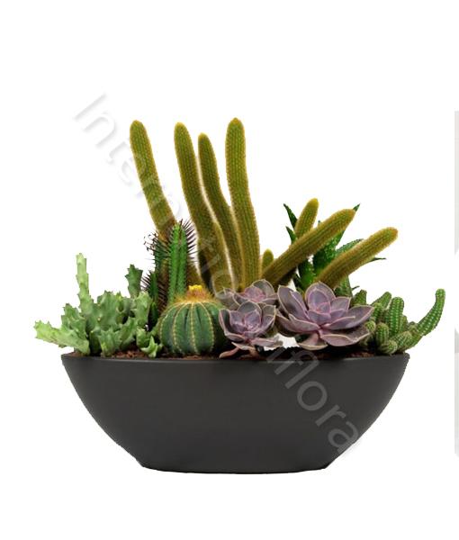 Vasi Per Piante Grasse.Composizione In Vaso Di Piante Grasse Con O Senza Spine Miste